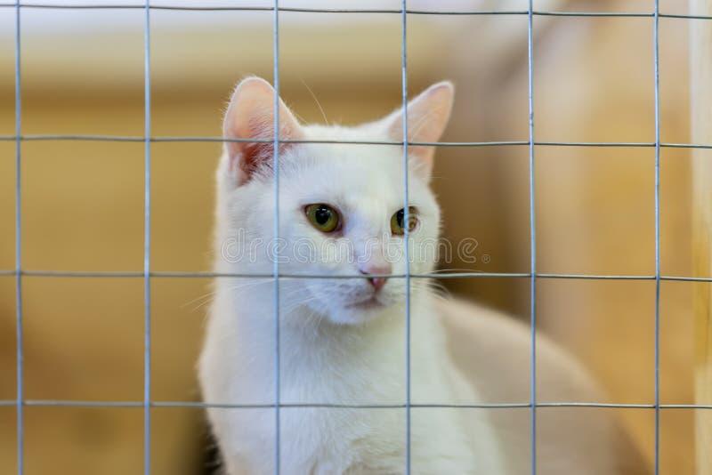Bia?y puszysty smutny bezdomny samotny kot, przygl?daj?cy od klatki za barami w schroniskowym czekaniu dla someone adoptowa? on o fotografia stock