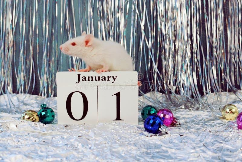 Bia?y szczura obsiadanie na drewnianym kalendarzu z bo?e narodzenie dekoracjami, symbol nowy rok 2020 zdjęcia royalty free