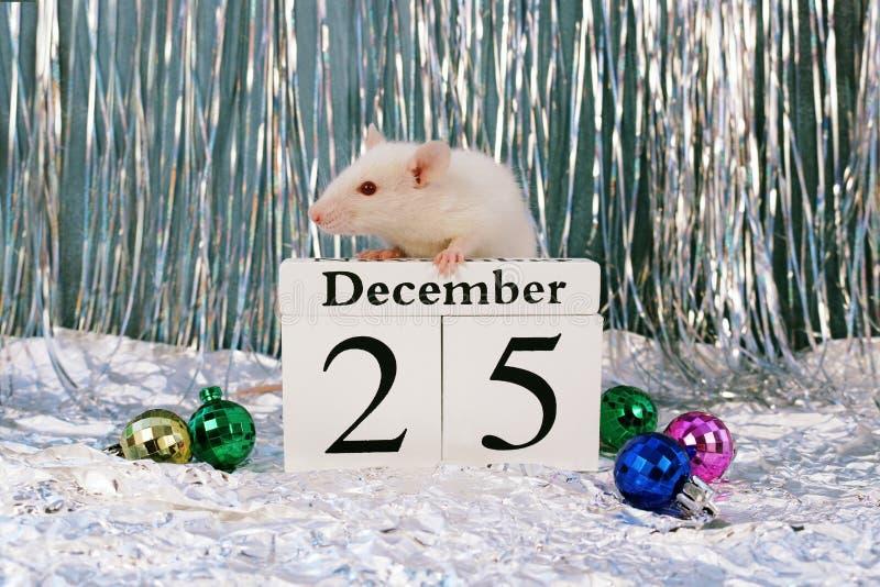 Bia?y szczura obsiadanie na drewnianym kalendarzu z bo?e narodzenie dekoracjami, symbol nowy rok 2020 obraz stock