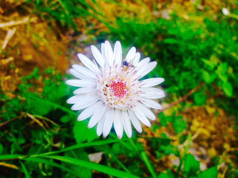 Biali błyszczący menchia kwiaty obraz stock