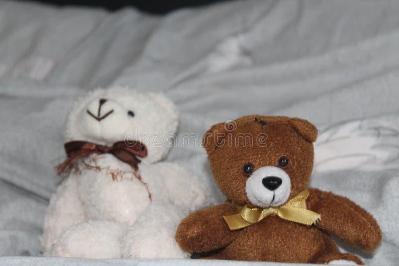 Biali i brown niedźwiedzie bawją się obsiadanie na łóżku zdjęcia stock