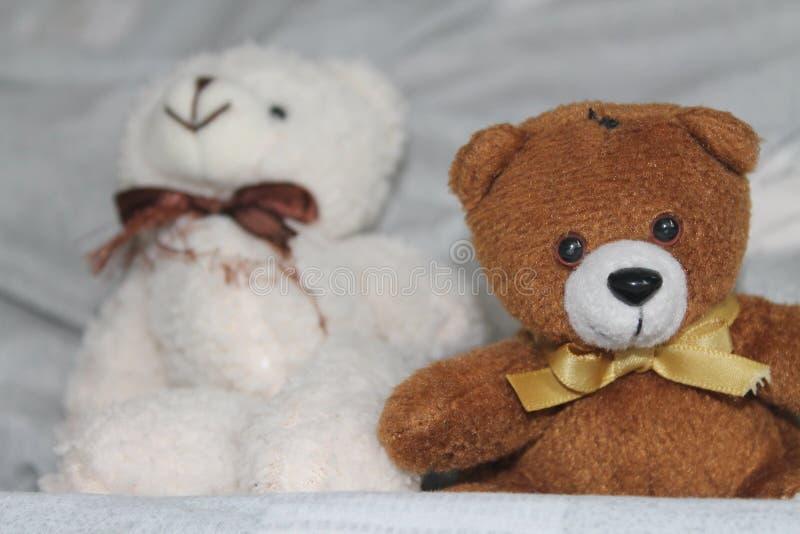 Biali i czarni niedźwiedzie bawją się obsiadanie na łóżku fotografia royalty free