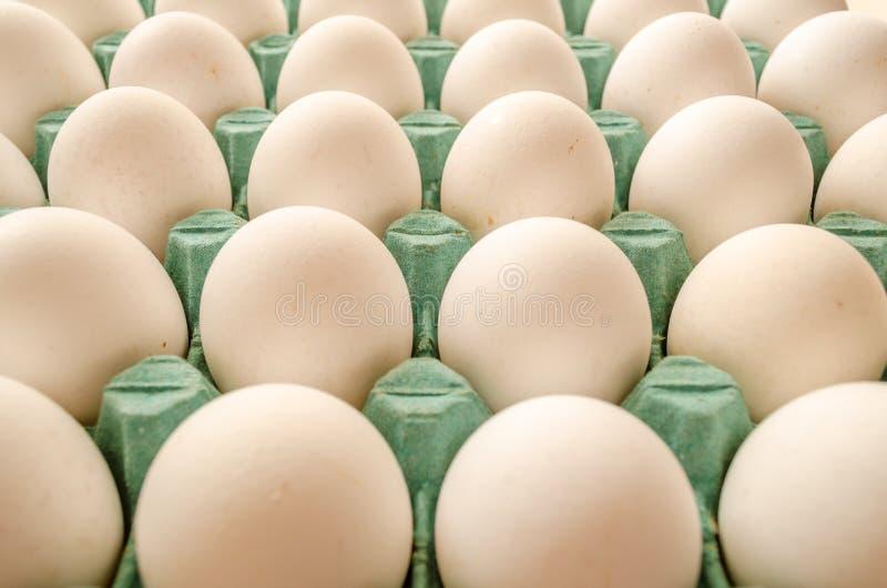 Biali jajka układali wpólnie w zielonym jajecznym kartonie obraz stock