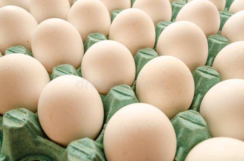 Biali jajka układali wpólnie w zielonym jajecznym kartonie fotografia stock