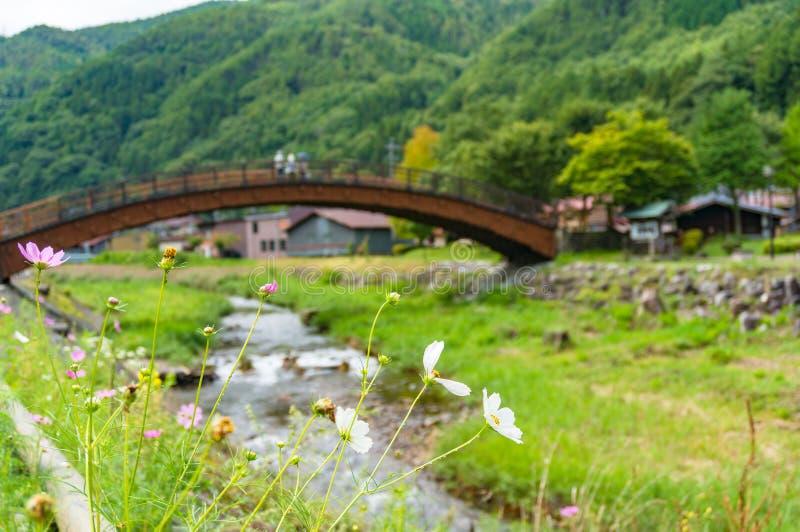 Biali kosmosy kwitną z Narai Dużym mostem na tle fotografia royalty free