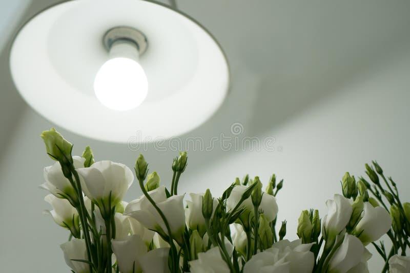 Biali kwiaty i lampy pojęcia wnętrza odosobniony biel obraz stock