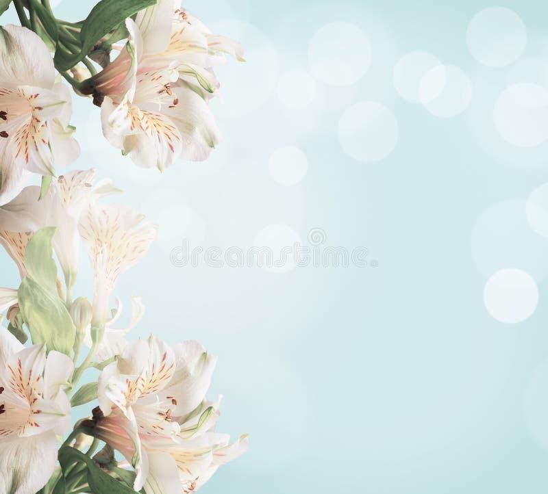 Biali kwiaty na bławym tle z zielonymi liśćmi i bokeh tło kwiecisty abstrakcyjne gałęziasty jaskrawy kwiecenia zieleni natury wio fotografia royalty free