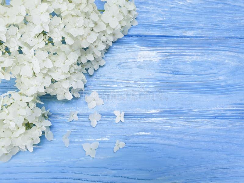 Biali kwiaty przyprawiają rocznik wiosny szablonu płatek świeżego na błękitnym drewnianym tła pięknie obraz royalty free