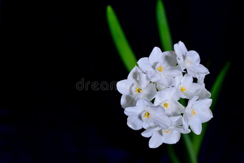 Biali kwiaty z ciemnym tłem zdjęcie stock
