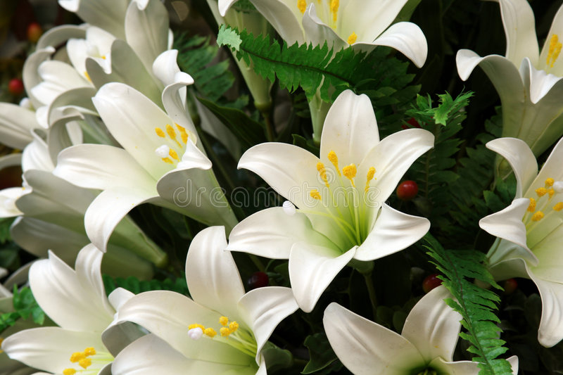 biali lillies obraz stock