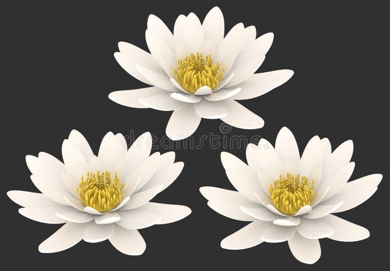 Biali lotosowi kwiaty odizolowywający ilustracja wektor