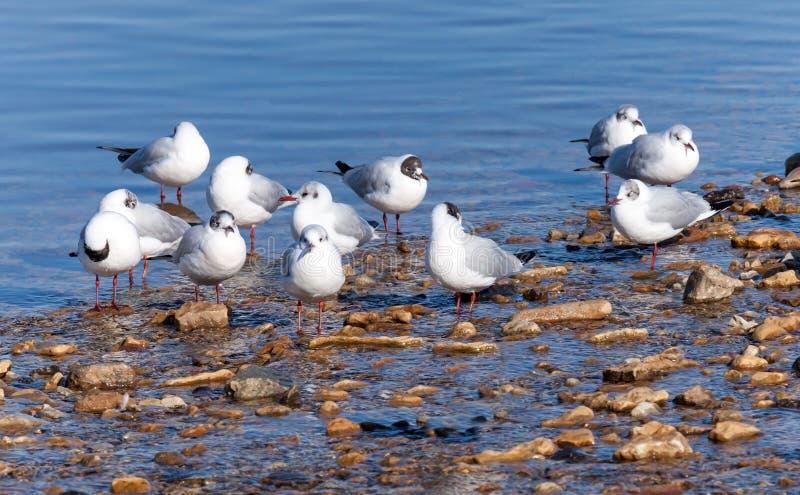 Seagulls na dennym wybrzeżu obrazy royalty free
