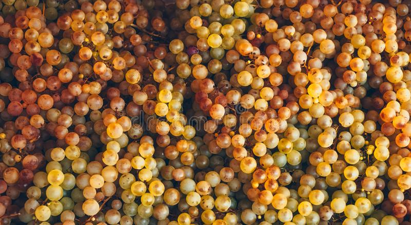 Biali winogrona dla sprzedaży na wprowadzać na rynek kram fotografia stock