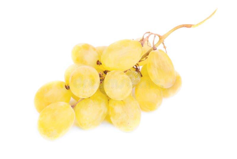 Biali winogrona odizolowywający na bielu obrazy royalty free