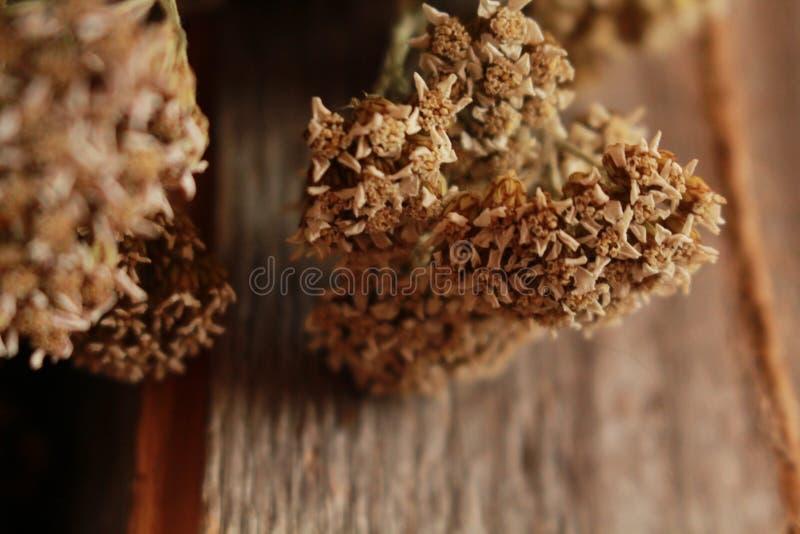 Biali wysuszeni kwiaty na szarym drewnie fotografia stock