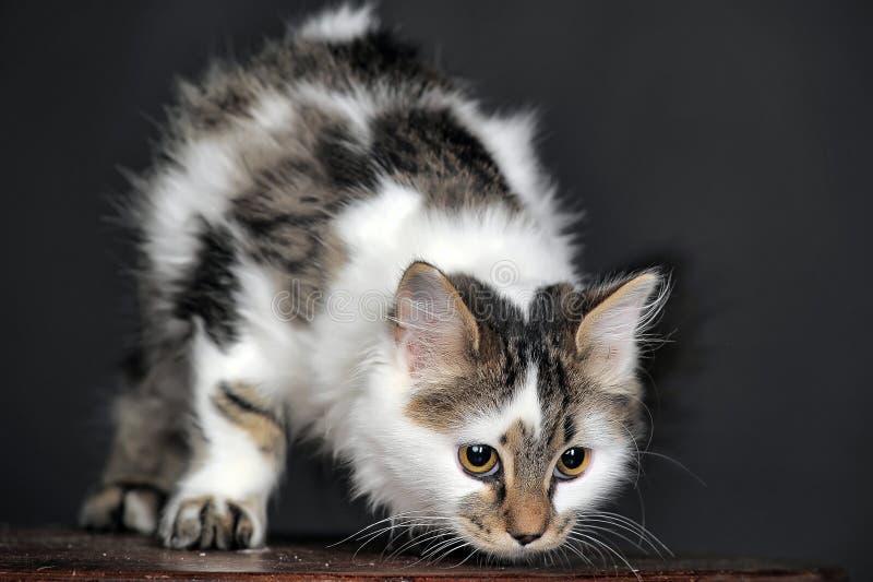 Bianco con il gatto a strisce dei punti immagine stock libera da diritti