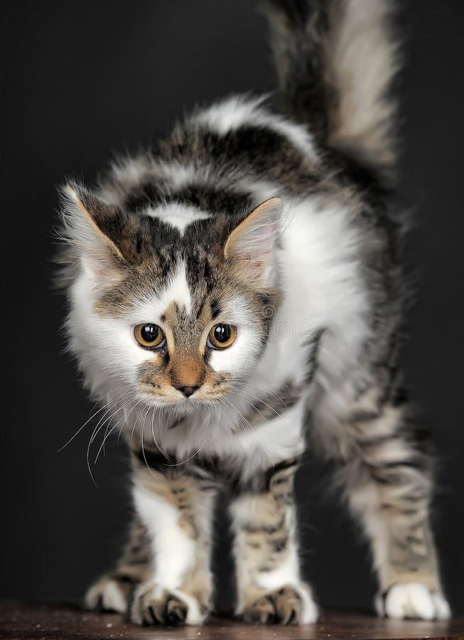 Bianco con il gatto a strisce dei punti immagine stock
