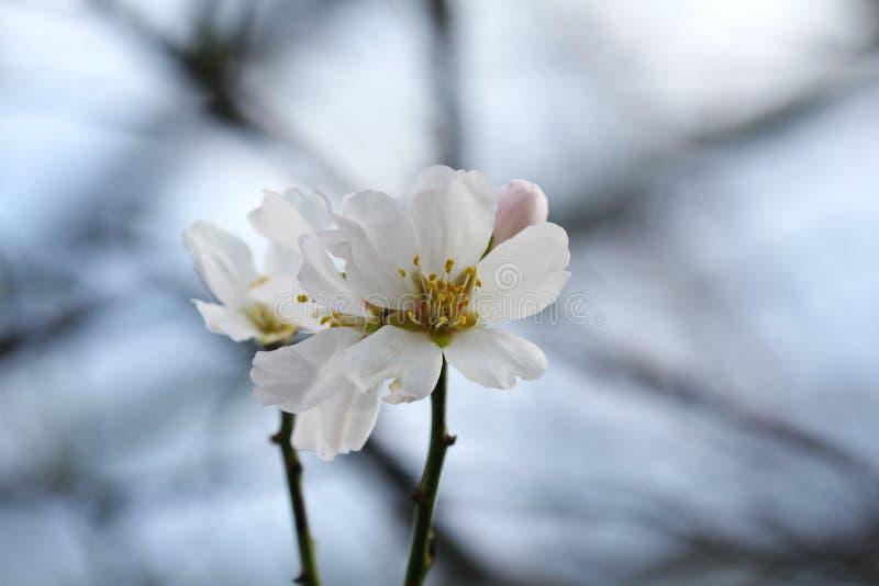 Bianco del fiore in nuture nell'inverno fotografia stock libera da diritti