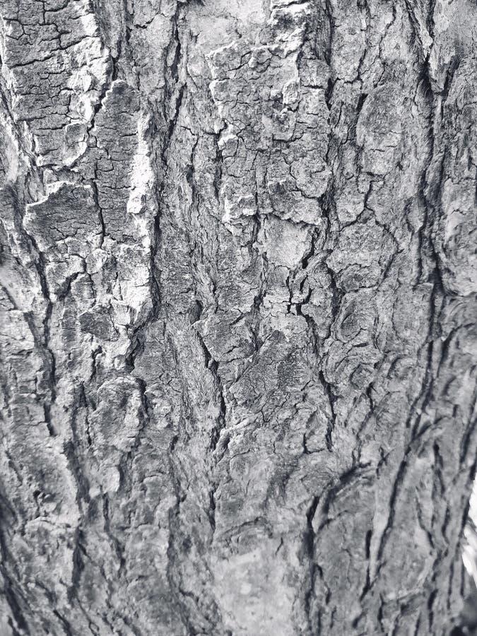 Bianco dell'albero immagine stock libera da diritti
