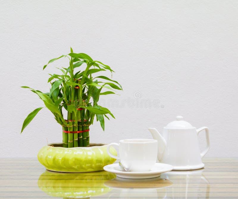 Bianco della tazza e della teiera di caffè Albero di bambù in vaso sulla tavola di vetro di legno e su un fondo della parete del  fotografia stock libera da diritti