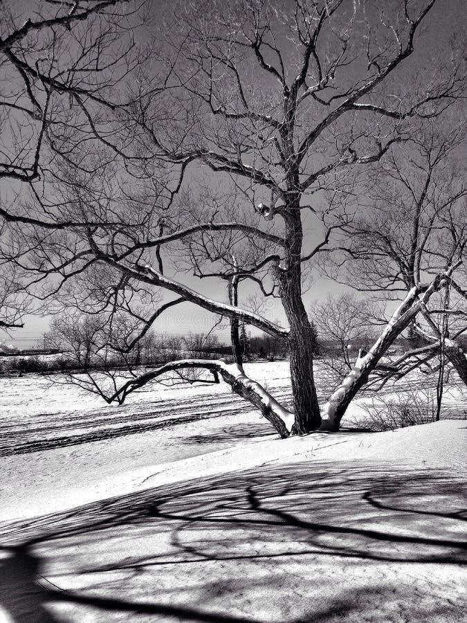 Bianco di inverno fotografie stock