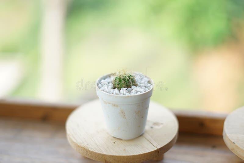 Bianco di verde del cactus di visualizzazione ad albero fotografie stock