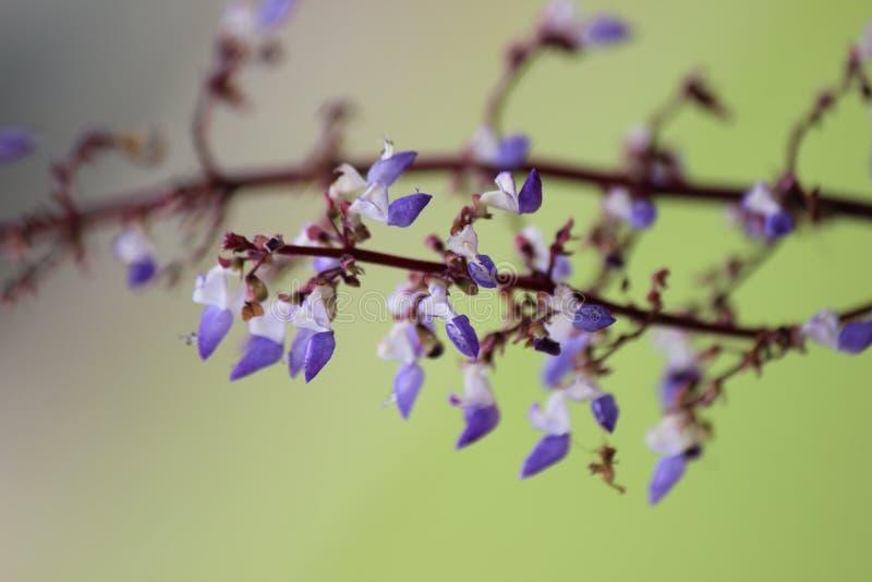 Bianco e fiore tropicale colorato lillà immagine stock libera da diritti