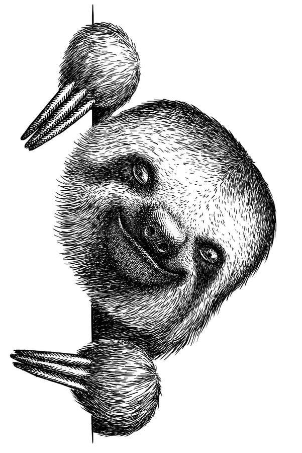 In bianco e nero incida l'illustrazione isolata di bradipo illustrazione vettoriale