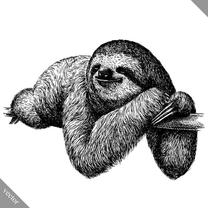 In bianco e nero incida l'illustrazione isolata di vettore di bradipo royalty illustrazione gratis