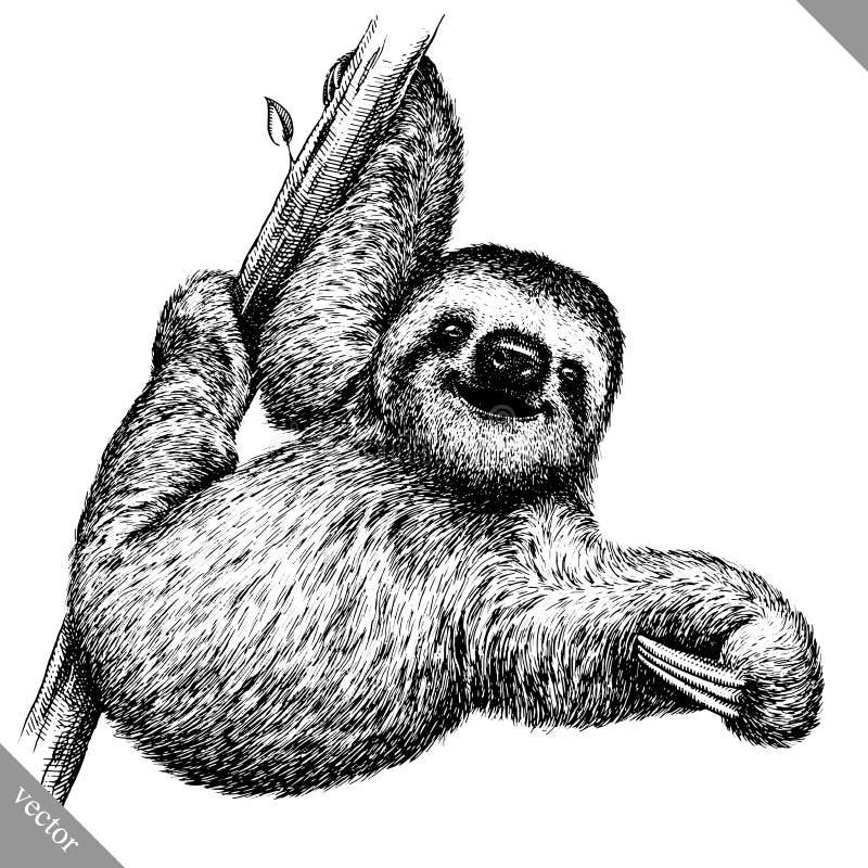 In bianco e nero incida l'illustrazione isolata di vettore di bradipo immagine stock