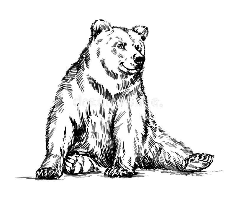 In bianco e nero incida l'orso isolato di vettore immagine stock