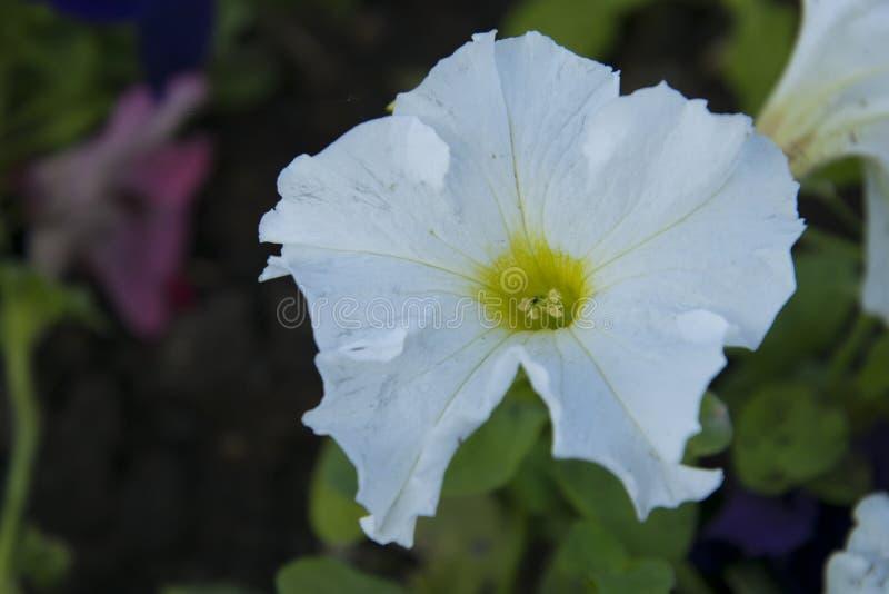 Download Bianco e riccio fotografia stock. Immagine di verde - 117980246