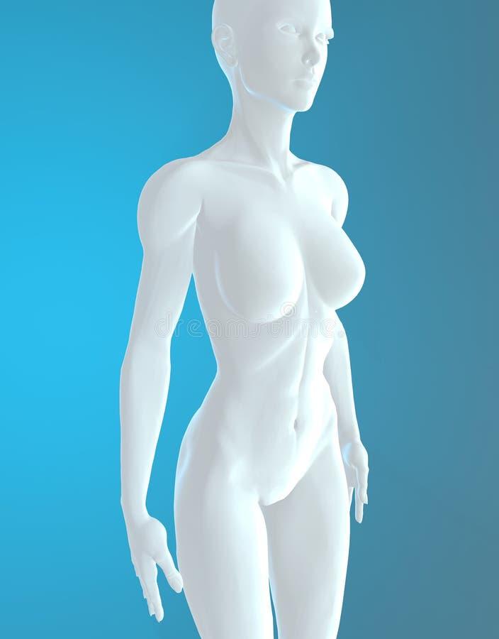 Bianco femminile di anatomia del corpo umano illustrazione di stock
