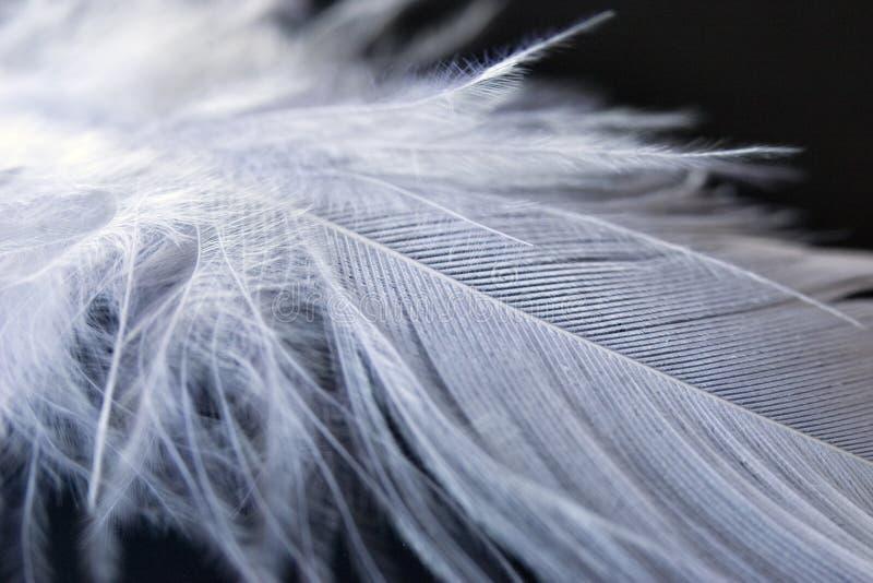 Bianco giù metta le piume a su priorità bassa nera fotografia stock