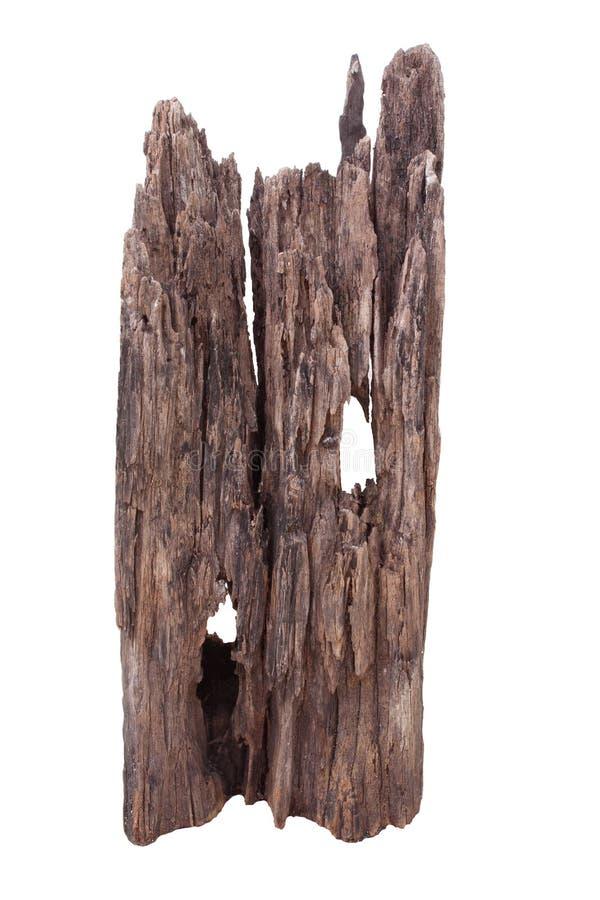Bianco isolato legno morto asciutto naturale immagine stock libera da diritti