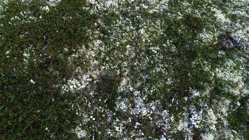 Bianco naturale Moss Covering Hills Above View della montagna fotografia stock libera da diritti