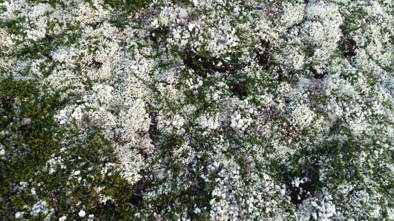 Bianco naturale Moss Covering Hills Above View della montagna immagini stock