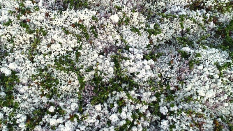 Bianco naturale Moss Covering Hills Above View della montagna immagine stock