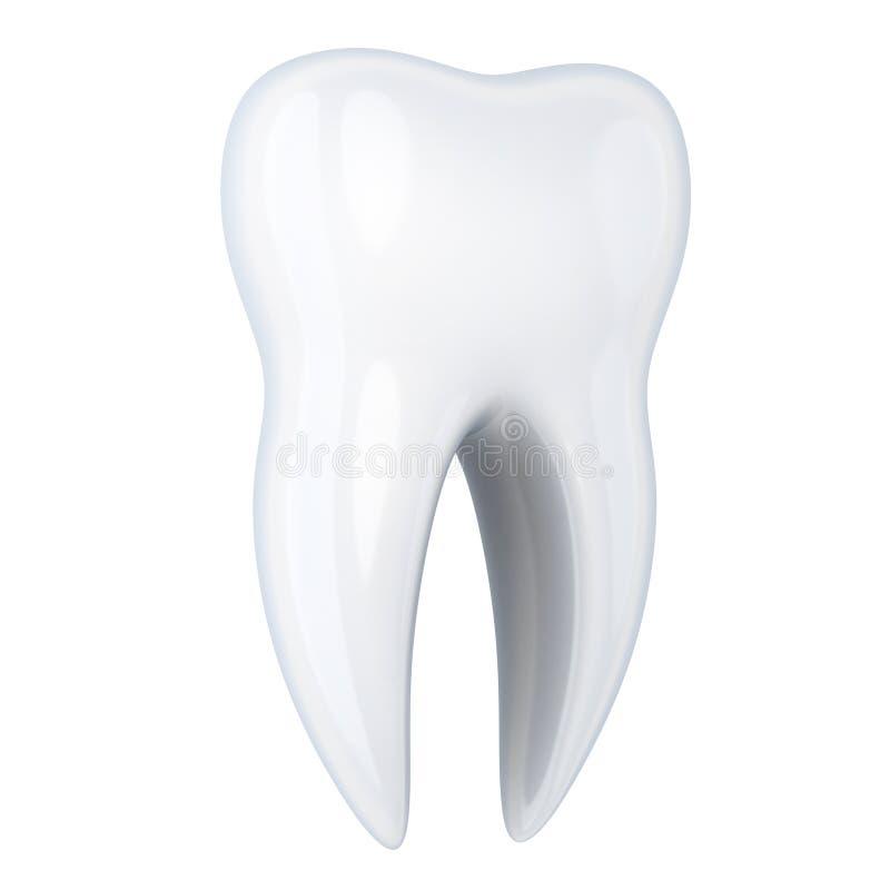 Bianco umano del dente isolato illustrazione vettoriale