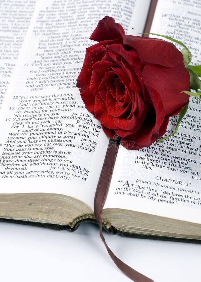 Bibbia e Rosa 2 fotografie stock