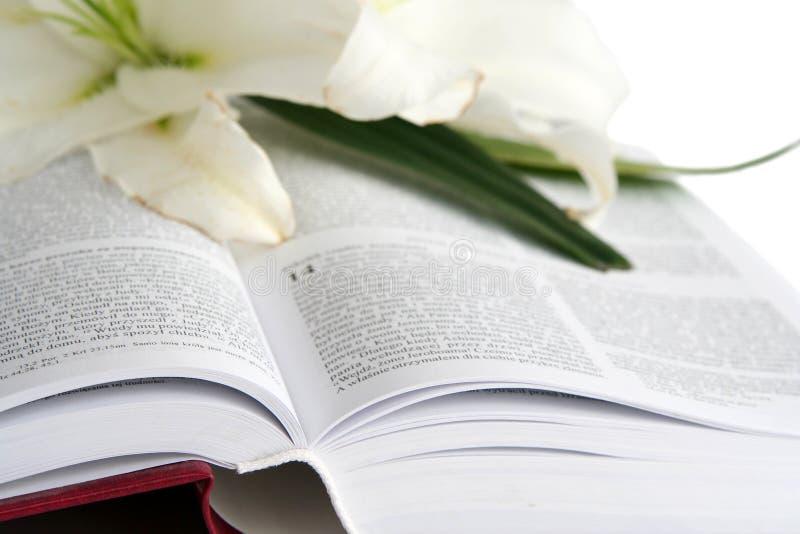 Bibel fotografering för bildbyråer