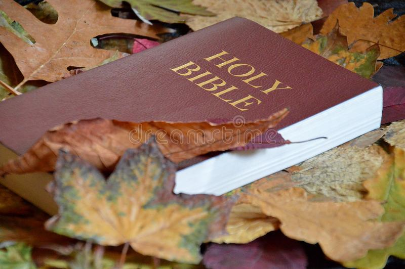 Bibel zwischen buntem Herbstlaub lizenzfreies stockbild