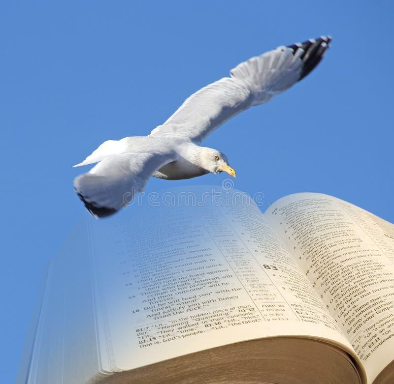 Bibelfågel av frihet arkivbild