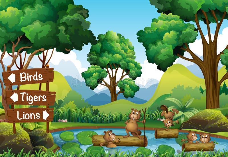 Biber im Teich und Zeichen für andere Tiere vektor abbildung