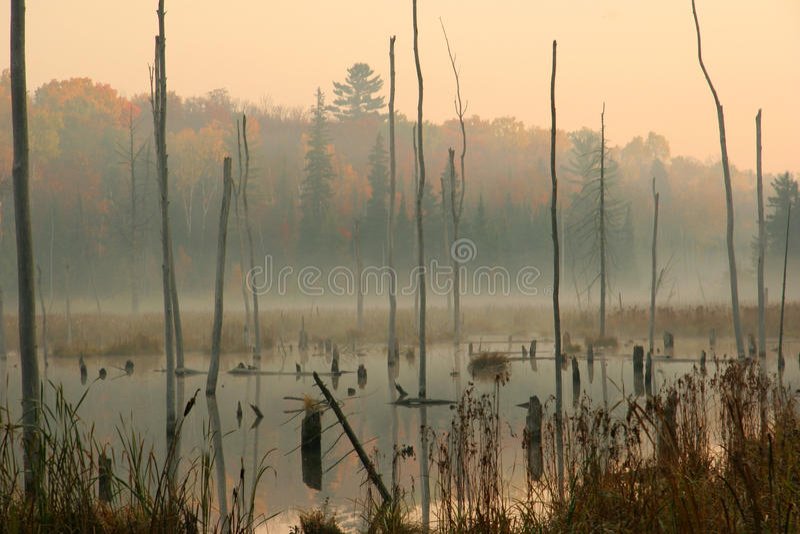 Biber-Teich im Herbst lizenzfreie stockbilder