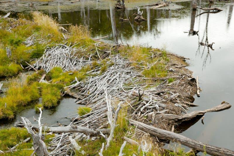 Biber-Verdammung - Tierra Del Fuego - Argentinien stockfoto