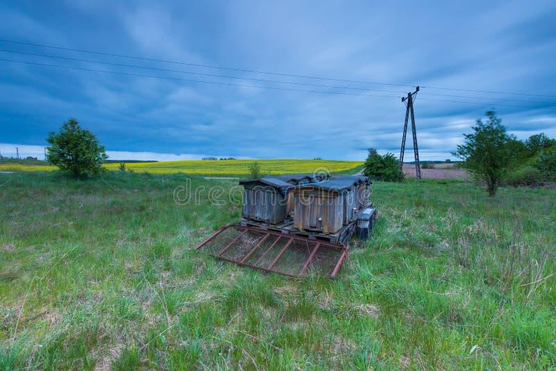 Bibikupor på slinga i lantligt landskap arkivfoton