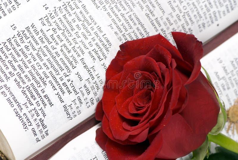 Bible et Rose 3 photographie stock