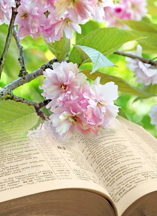 bible ouverte de fleur de printemps photo stock image du nuage fond 102363048. Black Bedroom Furniture Sets. Home Design Ideas