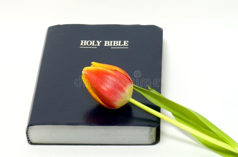 Bible sainte et fleur photographie stock libre de droits